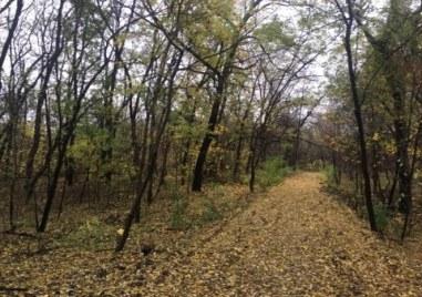 Есен в пловдивския парк Лаута