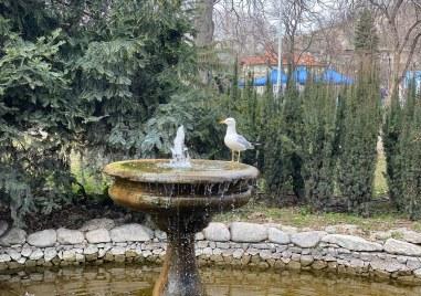 Не е Бургас! Пловдив е!